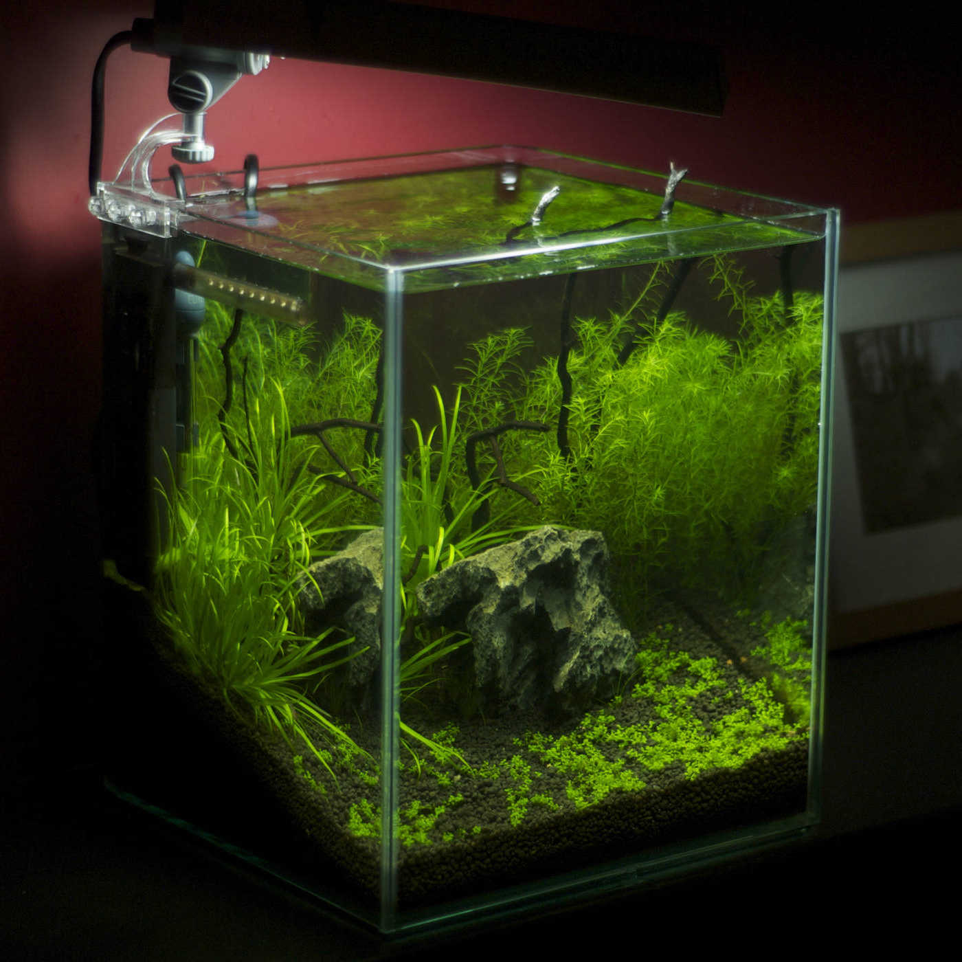 nano aquarium tipps. Black Bedroom Furniture Sets. Home Design Ideas