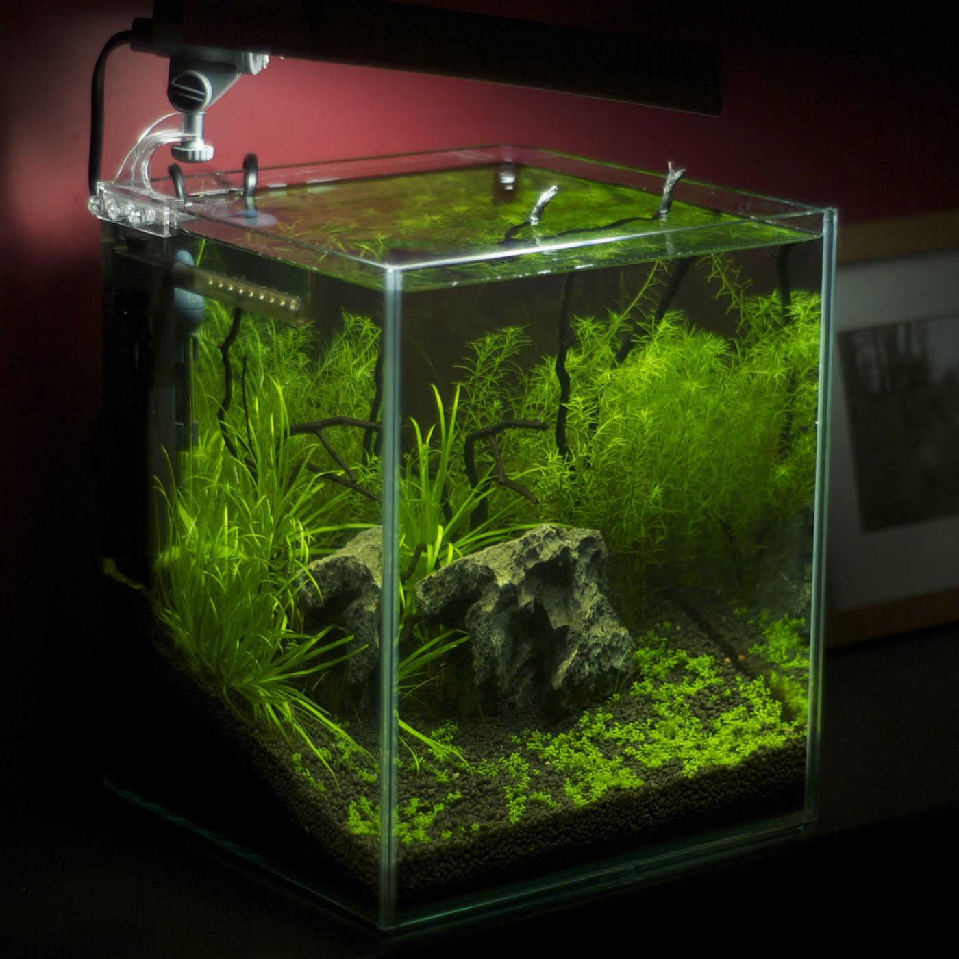 aquarium quadratisch interior design und m bel ideen. Black Bedroom Furniture Sets. Home Design Ideas